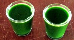 A Shot of Wheatgrass to Start the Day.