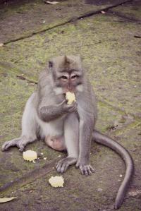 Monkey Ubud